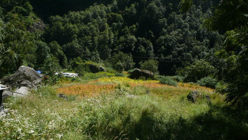 Vista del valle Bhuinder desde el sendero que lleva al Valle de las Flores